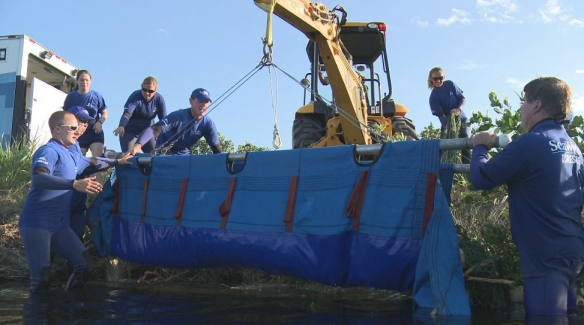 SeaWorld manatee rescue December 2012