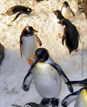 antarctica_penguins in penguin encounter sm