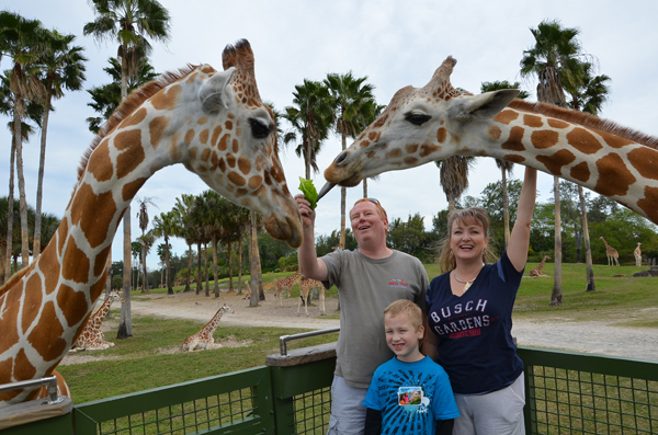 Giraffe Feeding at Busch Gardens Tampa WorldGiraffeDay
