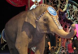ringling elephant