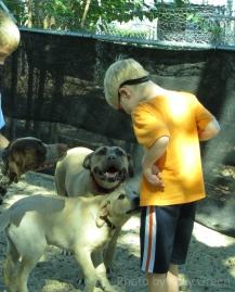 Doglando has friendly, furry friends.